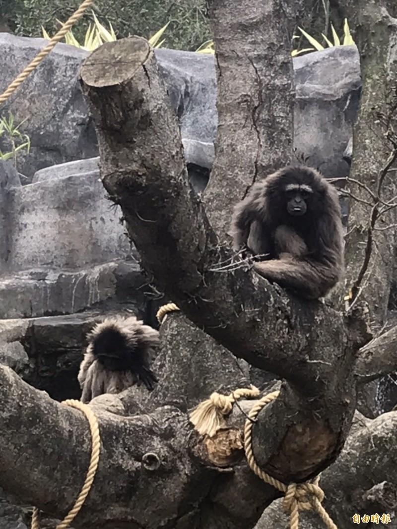 大年初三是出遊好日子,新竹市立動物園和新竹公園都吸引爆滿人潮,雖氣溫下降,仍不減人潮湧入,尤其是看各種動物明星。(記者洪美秀攝)