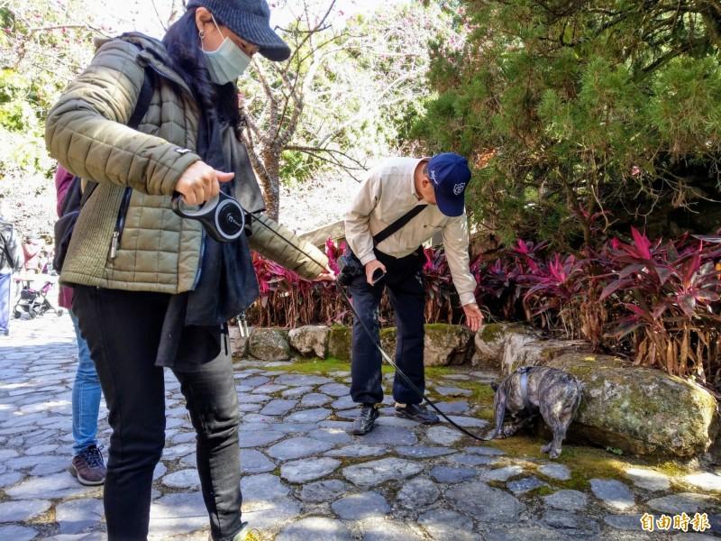 日月潭風景區內的九族文化村賞櫻祭開跑,今年還開放讓「毛小孩」入園,並有櫻花與寵物攝影賽讓攝影玩家大秀身手。(記者劉濱銓攝)