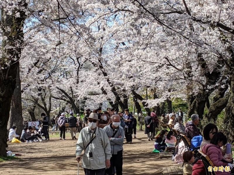 東京井之頭公園25日白天仍有大批賞櫻人潮。(記者林翠儀攝)
