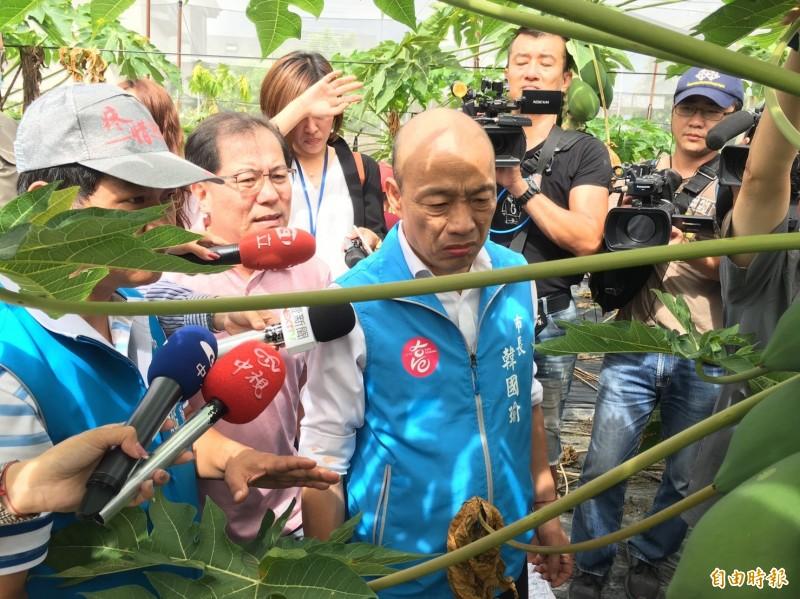 高雄市長韓國瑜人今天一早至美濃看木瓜農損情形。(記者許麗娟攝)