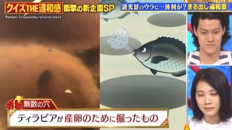 日本節目解釋洞洞草原成因。(黃一盛提供)
