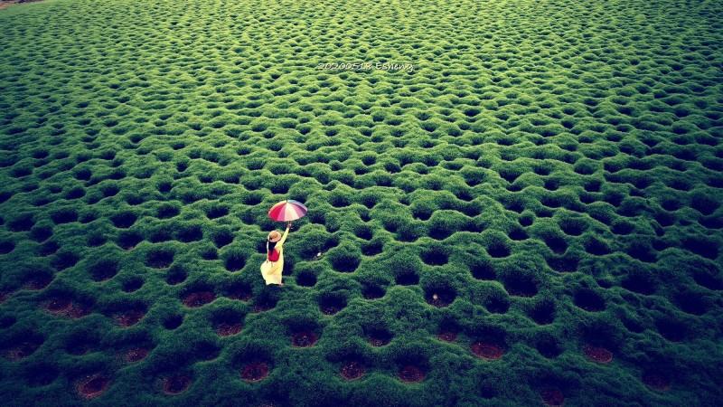 嘉義縣攝影師黃一盛拍下的洞洞草原奇景,紅到日本節目。(黃一盛提供)