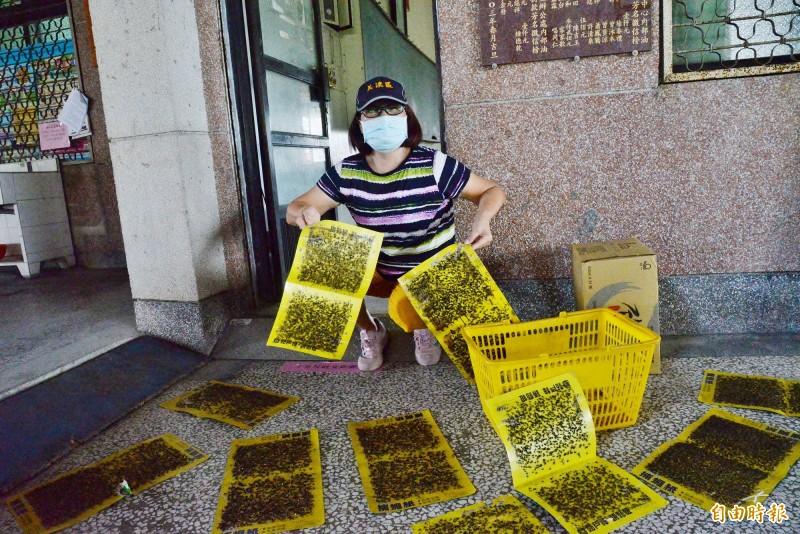 吉和里里長黃文梅拿出里民收集的蒼蠅貼,認為這樣的生活品質很糟。(記者許麗娟攝)
