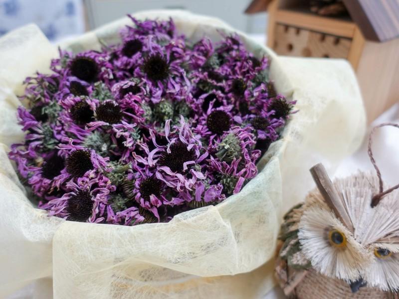 台中農改場育成台灣品質紫錐菊台中1號。(農委會提供)