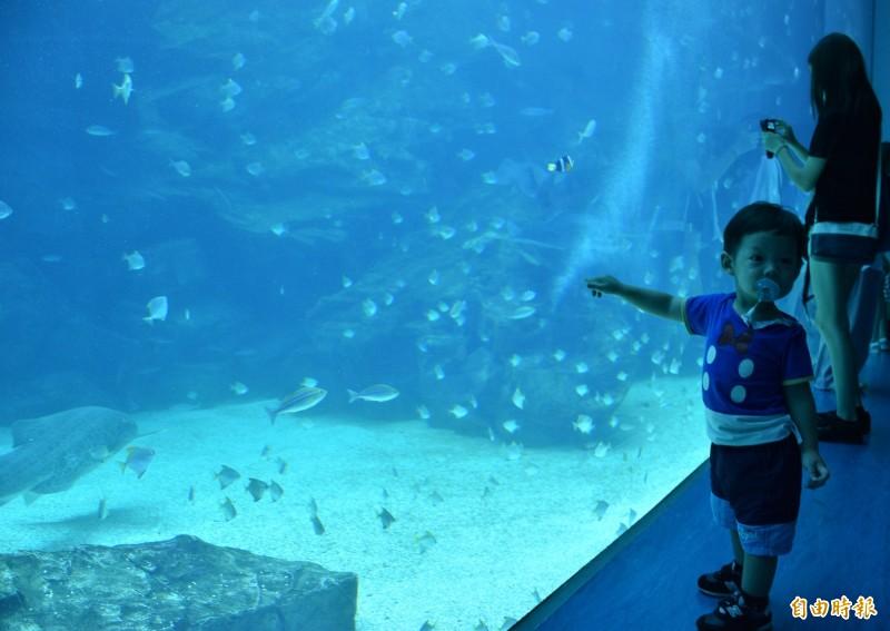 Xpark水族館展出各式海底生物在落地玻璃窗內悠游。(記者李容萍攝)