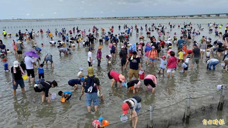 七股潟湖六孔碼頭的觀光赤嘴園,擠滿遊客來體驗挖文蛤兼洗褲的樂趣。(記者楊金城攝)