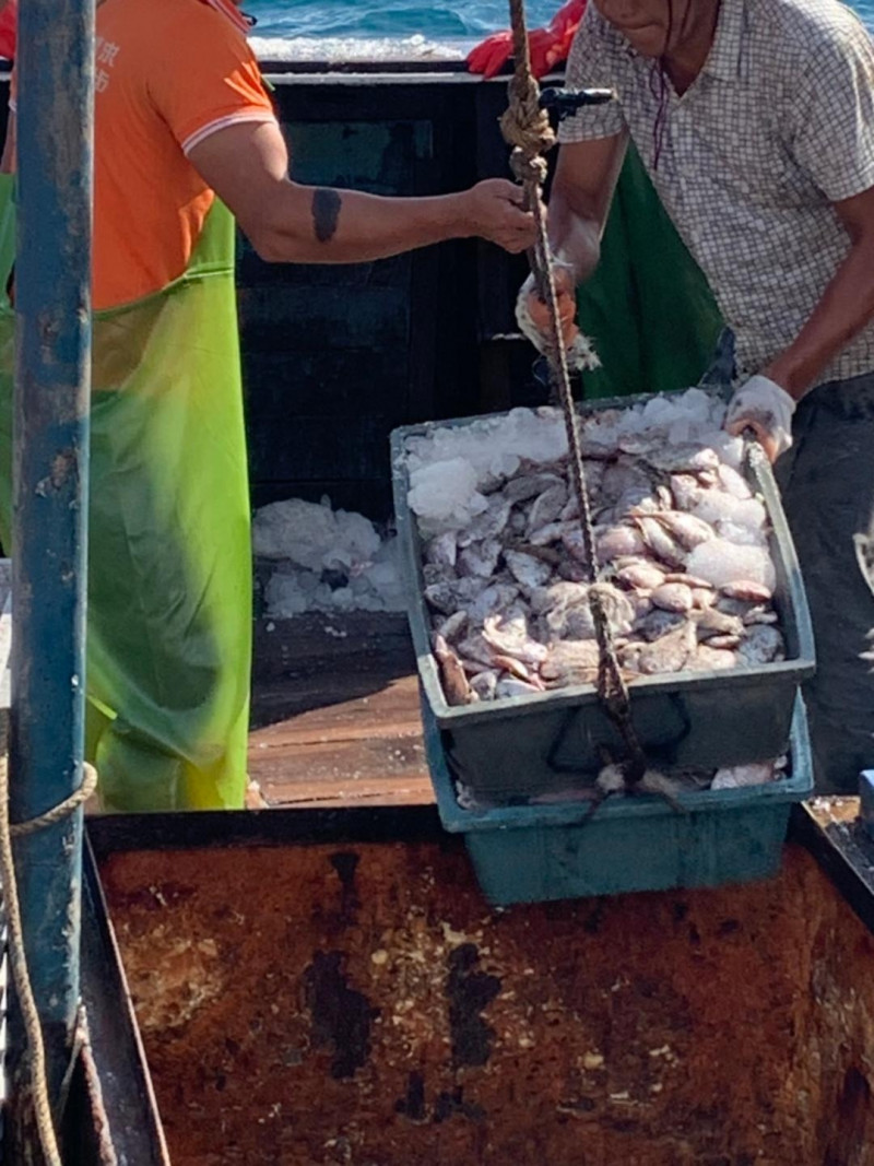 中國漁船船長宣稱僅有五百公斤漁獲,清艙卻高達三千公斤。(澎湖海巡隊提供)
