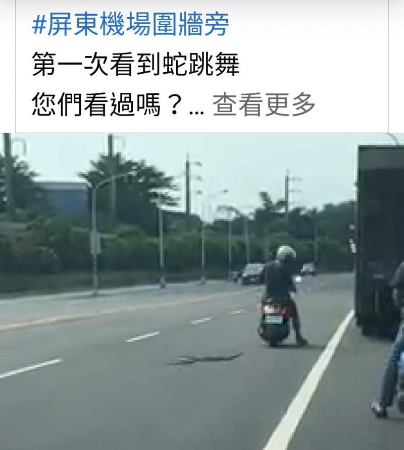民眾拍下大蛇在馬路又竄又跳激烈扭動身軀的畫面,機車騎士見狀趕緊讓開。(取自臉書屏東吃喝玩樂公開社團)