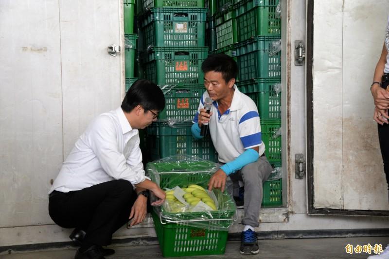 陳其邁視察香蕉催熟技術。(記者許麗娟攝)