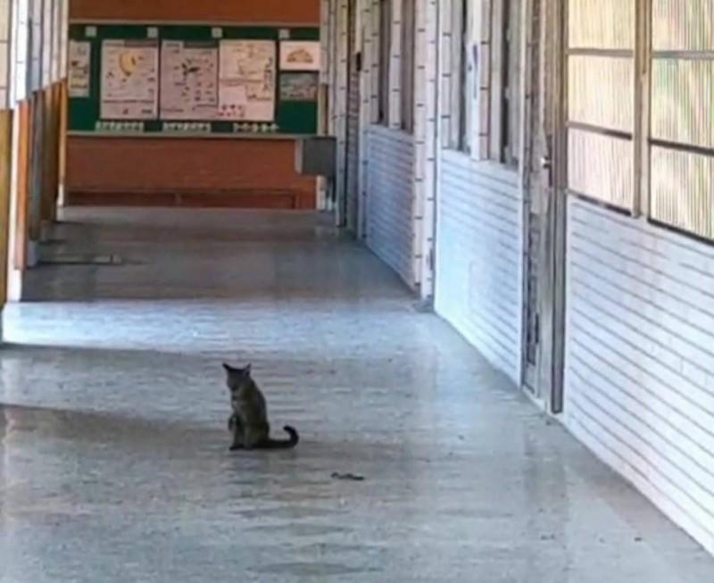 小蛇被連串攻擊後在地上一動也不動,花貓坐在一旁輕點5下尾巴,彷彿是KO對手的最後讀秒。(記者陳建志翻攝)