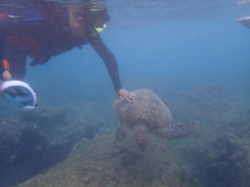 小琉球再傳潛水客摸龜。(記者陳彥廷翻攝)