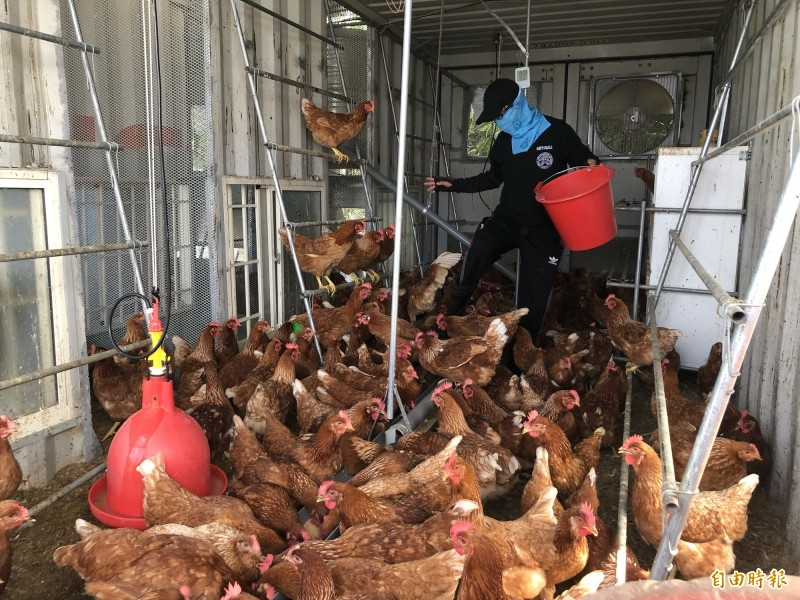 屏東萬人關懷協會打造蛋雞舍,讓所飼養的仿土雞全天候24小時聆聽教會詩歌音樂。(記者羅欣貞攝)