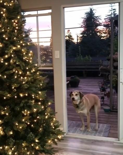 可愛的狗狗躊躇家門口,以為眼前有一扇透明的玻璃門而遲遲不敢進屋,逼得小主人得假裝做出「開門」動作,才讓狗狗開心的跑回家中。(圖擷取自IG)