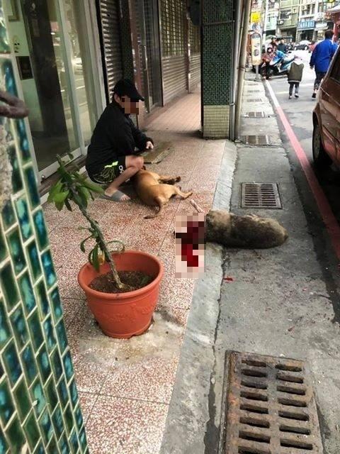 遭比特犬虐殺的浪浪已不治死亡。 (圖翻攝自基隆人踹共臉書粉專)
