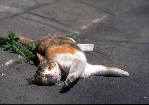 [新聞] 為何?首爾近3年逾1.5萬隻貓遭路殺 狗僅