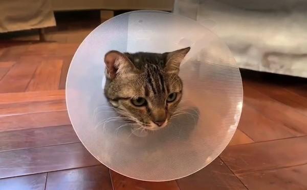 蔡總統解釋,「Cookie今天因為頭上有一塊需要治療,所以戴著帽子。」(圖擷取自蔡英文LINE)