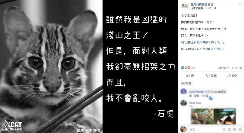 臉書粉專「台灣石虎保育協會」貼文表示,石虎面對人類「無招架之力」,也「不會亂咬人」。(圖翻攝自臉書粉專「台灣石虎保育協會」)