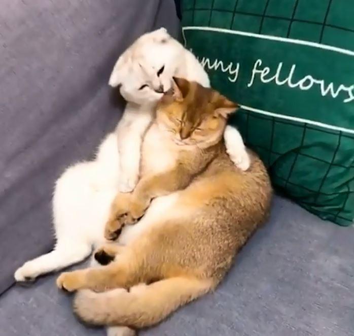 一隻橘貓與另一隻白貓正在沙發上彼此撫摸著。(圖擷自IG)