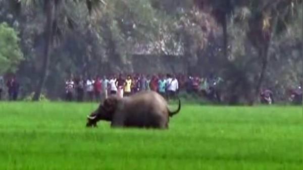 東印度一村落的5位村民遭到走失野象踩踏身亡。(圖擷自印度斯坦時報)