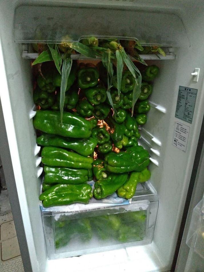 第二個冰箱則堆滿青椒,最上層還有些許的玉米。(圖擷自爆廢公社公開版)