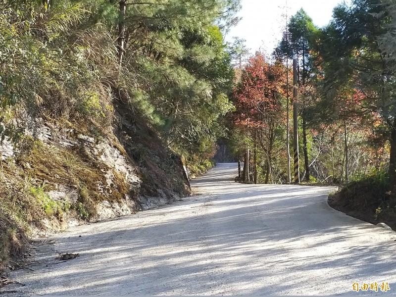 尖石鄉公所獲前瞻基礎建設計畫核定約1.17億元,辦理司馬庫斯部落聯絡道道路品質改善工程。(記者廖雪茹攝)