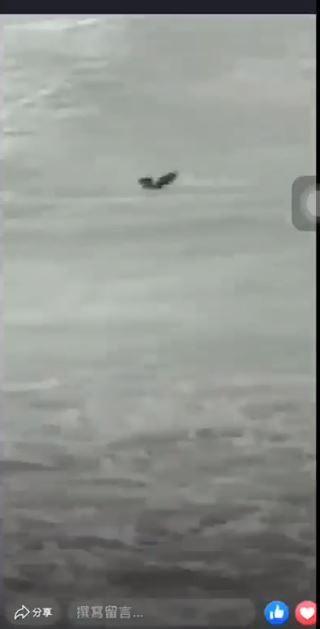 有網友在臉書《爆怨公社》貼出鸚鵡落海影片,指出主辦單位為苗栗縣鸚鵡訓練交流協會。(圖取自臉書社團《爆怨公社》)