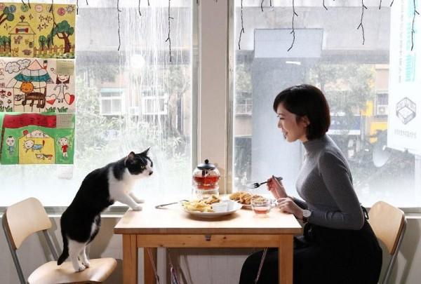 芭樂人類學》去貓咖啡吸貓