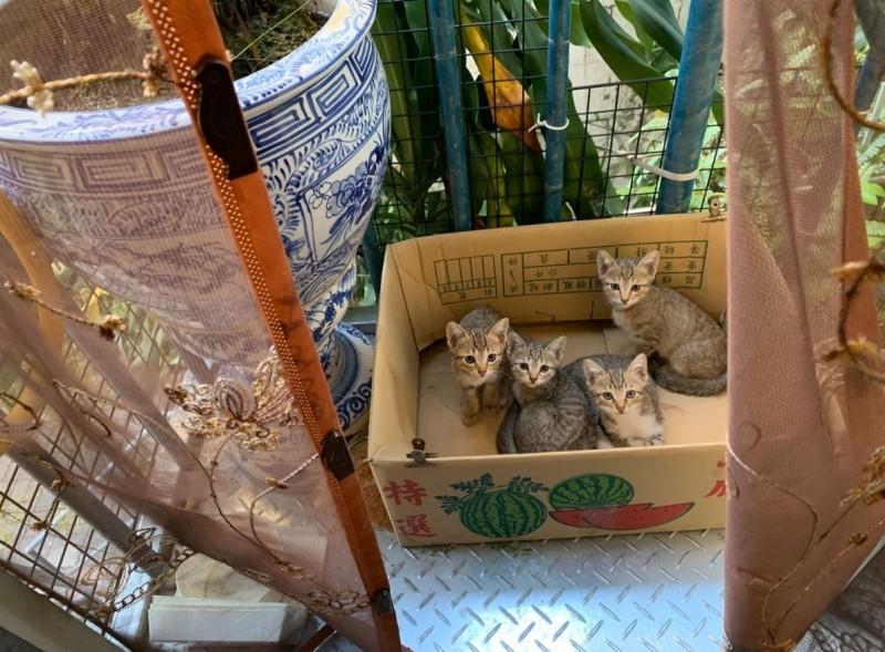 原PO拍下佔據陽台紙箱的4隻小惡魔,牠們一臉無辜地盯著鏡頭。(圖擷自爆怨公社)