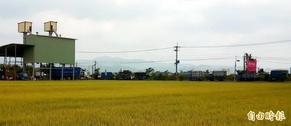 載穀車到民營糧商集運站外大排長龍。(記者楊金城攝)