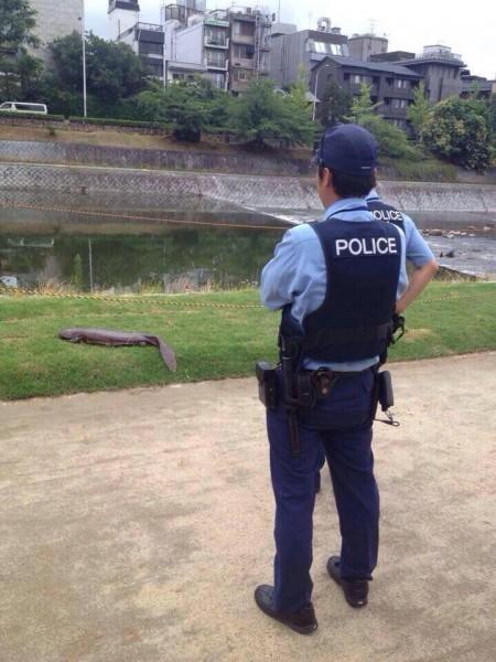 巨型娃娃魚上岸,還驚動日本警方到場關心。(圖片擷取自Kyoto Journal臉書)