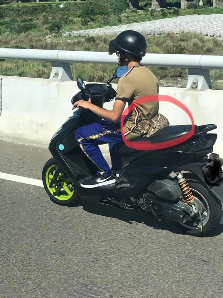 有民眾發現,1名機車騎士的後方有隻貓乖巧地趴著,甚至有網友開玩笑稱那是石虎。(圖擷取自貓咪也瘋狂俱樂部)