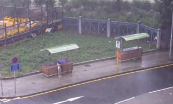 專頁特別在雨天實測,發現有路人躲在避雨亭下,卻依然撐傘。(圖擷取自「樂活鰂魚涌」臉書專頁)