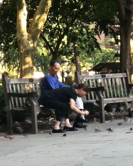 1名中國女子在美國紐約公園中的誇張行徑,現在於網路上瘋傳,她竟然徒手抓住地上的麻雀並放進塑膠袋裡,疑似是要帶回家料理,令美國網友看了直呼「WTF?」。(圖擷取自影片)