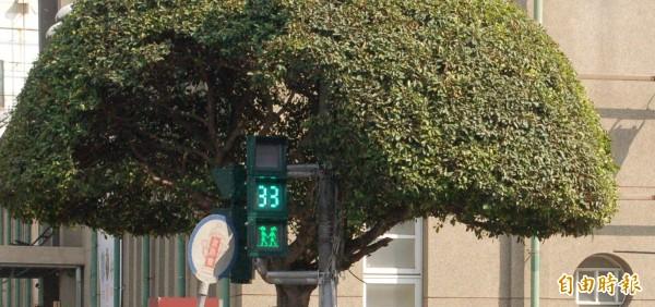 屏東首創的「情侶版」小綠人今天正式在屏東街頭亮相,綠燈時小綠人情侶牽手過馬路。(記者李立法攝)