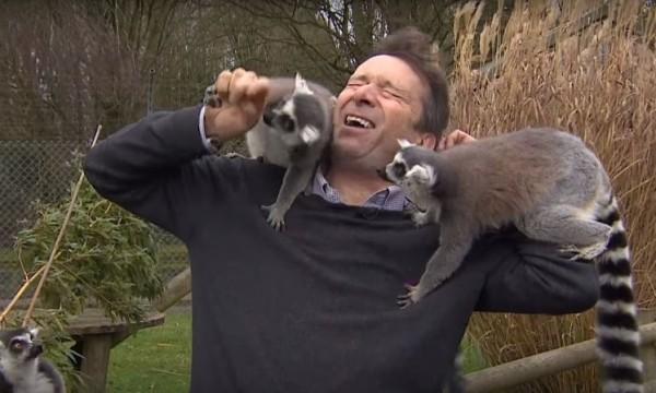 BBC記者鄧洛普為求好畫面,選定狐猴群當他的嘉賓,但他未料到牠們不受控制,中斷錄影。事後影片曝光,引起網友熱議。(圖截自鄧洛普推特)