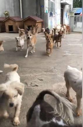 男子被狗群簇擁著。(圖擷自爆廢公社二館)