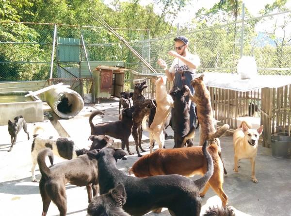 常有來自各地的志工來「張媽媽流浪動物之家」幫忙照顧動物。(圖擷自張媽媽流浪動物之家臉書)