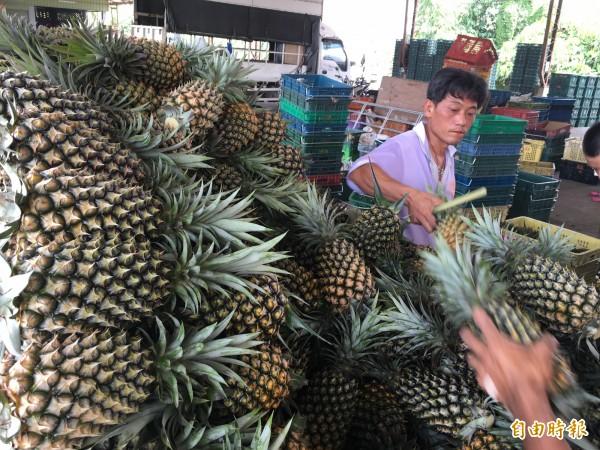 中國方面日前公告將加強台灣柑橘類水果檢疫,不過有台商表示,經手的台灣鳳梨也卡關。圖與新聞無關。(資料照,記者黃淑莉攝)