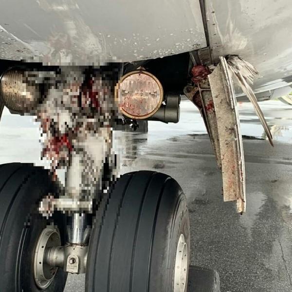 鳥屍卡在起落架中。(圖取自Aviation Tanzania臉書專頁)