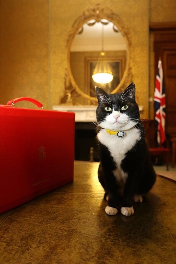 英國外交官麥當勞(Simon McDonald)在推特上發文表示,英外交部「捕鼠官」巴麥尊(Palmerston)已服務滿2週年,並在過去1年抓了30隻老鼠和1隻鴿子。(圖片擷取自@SMcDonaldFCO推特)