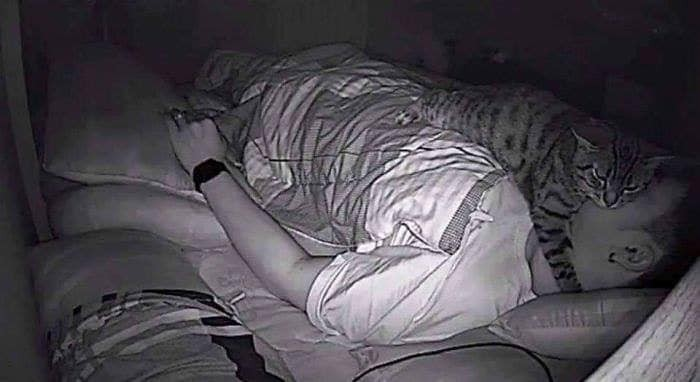 苦主架設攝影機,才發現原來是自己的「喵皇」每到半夜時,都跳到他的身上「磨蹭示愛」,不過卻也不小心用身體封住了他的口鼻!(擷取自爆笑公社)