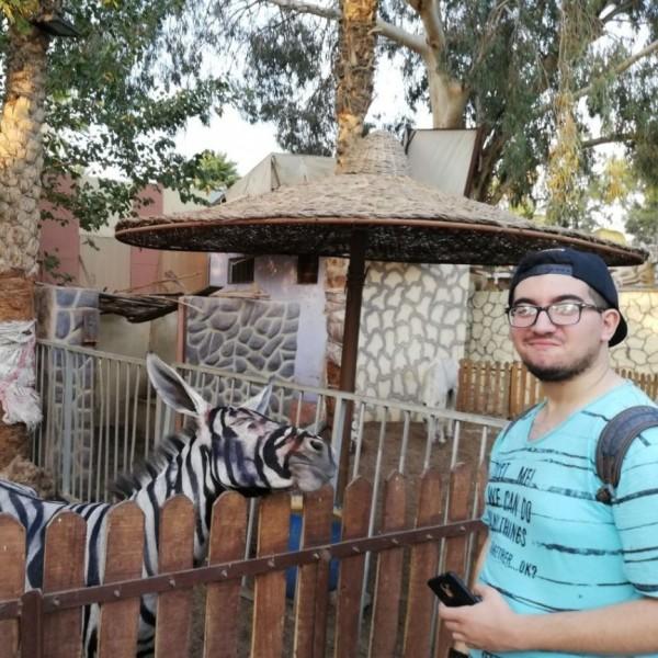 埃及一位學生發現動物園的斑馬身上線條糊掉,其實斑馬是驢子偽裝。(圖擷自臉書)