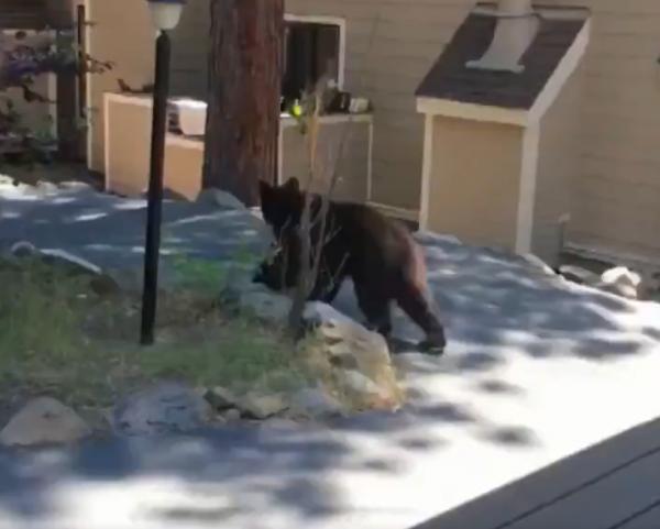 阿嬤沒在怕,直接將熊趕走。(圖擷自推特)