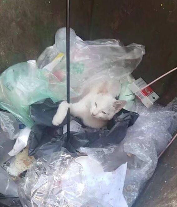 流浪貓被4隻弓箭射中後,還被丟到垃圾桶。(圖翻攝自微博)