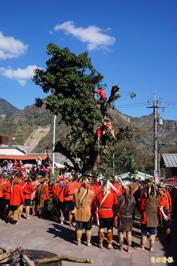 鄒族勇士點燃聖火後,進行神樹祭儀。(記者曾迺強攝)