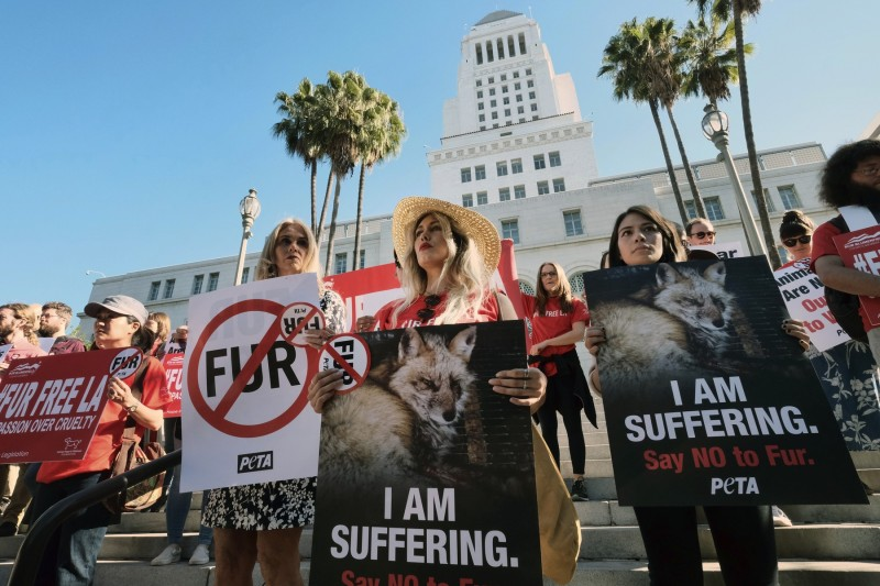 美國加州州長12日簽署禁止銷售及生產皮草商品的法案,將在2023年正式實施。圖為去年9月,洛杉磯市群眾舉牌上街抵制皮草。(美聯社)