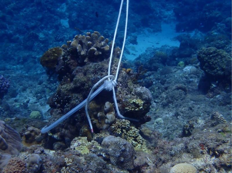 有潛客以D字環和繩索環扣住珊瑚礁及活體珊瑚。(擷自臉書粉專靠北潛水)