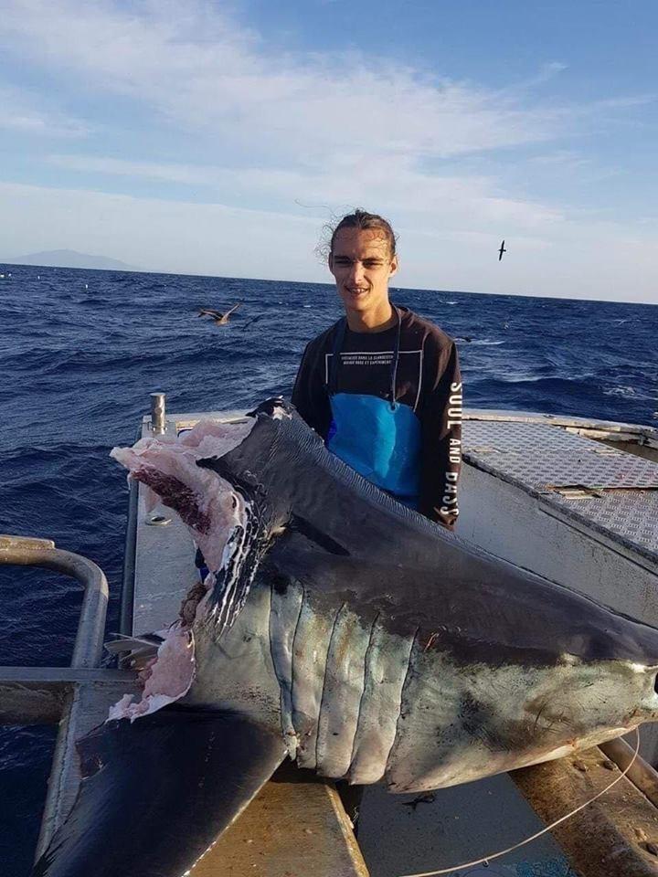 漁夫捕獲一顆鯊魚的頭,光頭就重達100公斤。(圖翻攝自臉書社團Pro Fishing Videos)