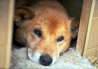 到底是什麼深仇大恨,要用無辜的小狗來發脾氣?新北市動物保護協會獲報指汐止路邊一名中年男子竟公然在路上虐狗。(情境照)