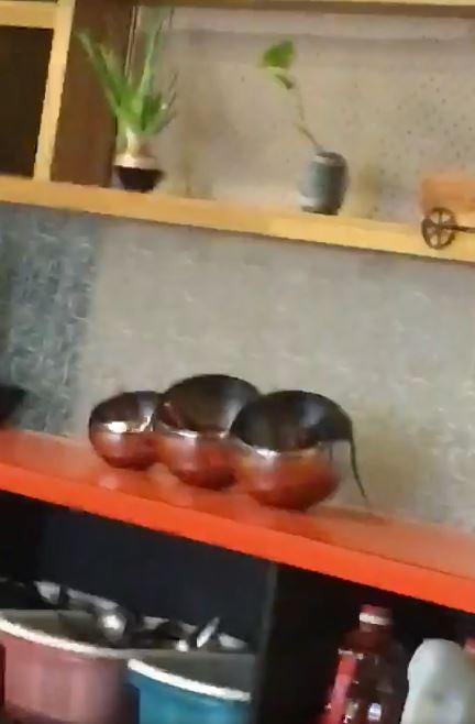 民眾到彰化一家火鍋店用餐,卻驚見老鼠埋頭大啖醬料!(翻攝自「爆料公社」臉書)